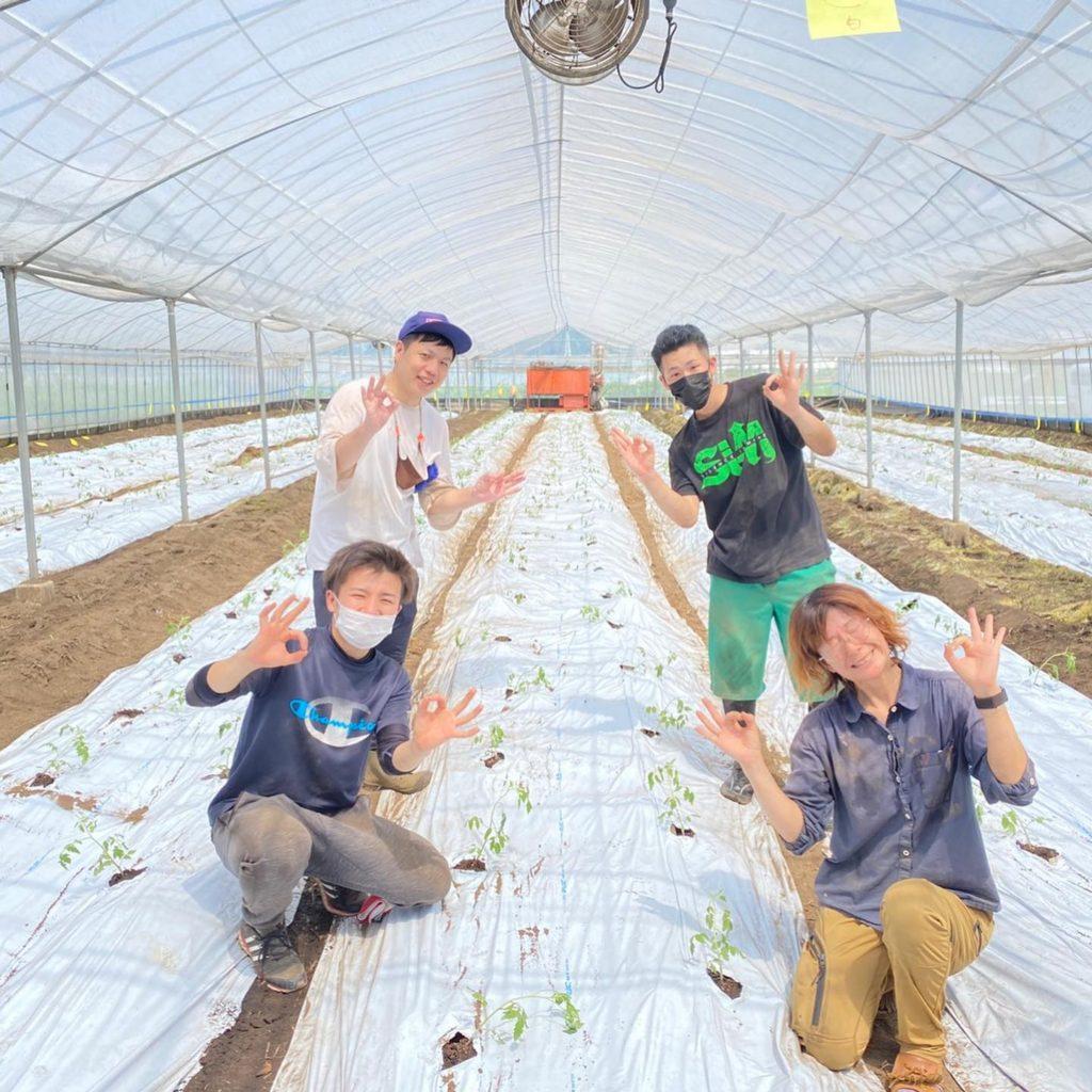 ミニトマト定植